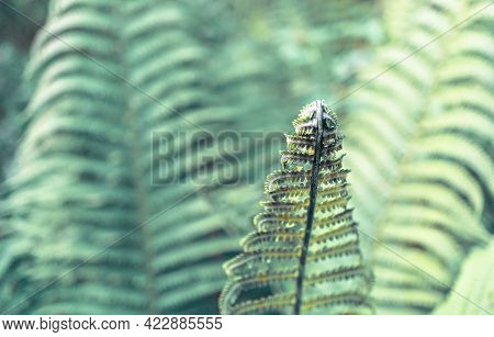 Fern Leaf Frond Close Up On Green Natural Blurred Background Copy Space, Toned, Plant Growth, Ecosys
