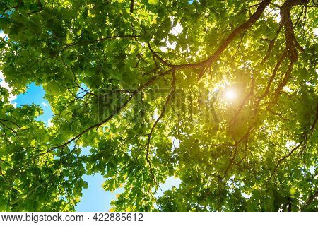 Spring Summer Concept Background. Variety Crowns Of The Trees In The Spring Forest Against The Blue