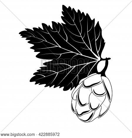 Vector Beer Hop Illustration . Branch Of Hop Malt For The Brewery.  Isolated On A White Background.