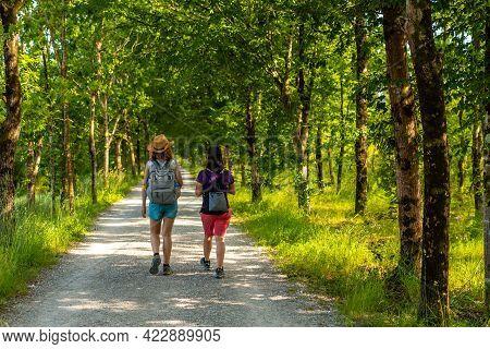 Two Friends Walking Along The Beautiful Path Between Trees In The Urdaibai Marshes, A Bizkaia Biosph