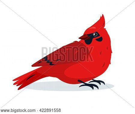 Red Cardinal Bird. Cute Small Bright Bird Icon Isolated On White Background. Vector Illustration For
