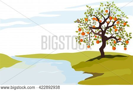Stock Vector Illustration Of A Tree Of Persimmons For Korean Chuseok Holiday. Ripe Persimmon On A Br