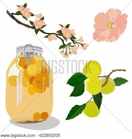 Vector Stock Illustration Of Plum Wine. Japanese Alcohol Made Of Plums. Set Bank In Compote, Apricot