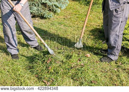 Employees Of The City Utilities Are Engaged In Cleaning Dry Leaves On The Lawn Of The City Park. Rak