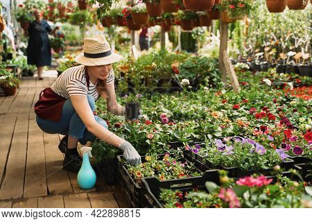 Woman Gardener In Hat And Gloves Works With Flowers In The Greenhouse.