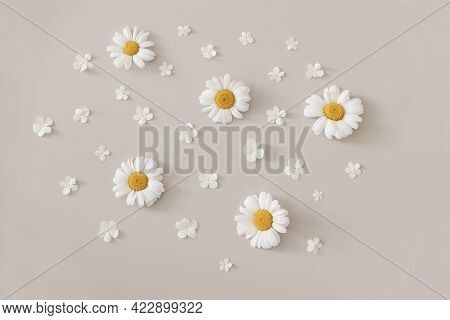 Beautiful Sprig, Summer Floral Pattern. Composition Of Blooming White Oxeyey Daisy And Viburnum Flow