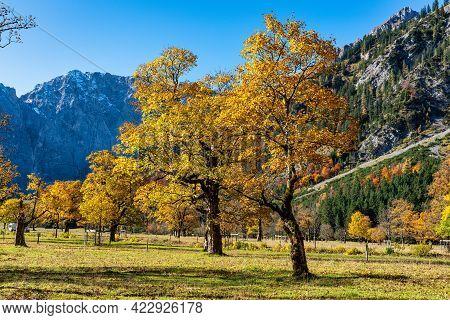 Autumn View Of The Maple Trees At Ahornboden, Karwendel Mountains, Tyrol, Austria