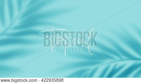 Realistic Transparent Shadow From A Leaf Of A Palm Tree On The Blue Background. Tropical Leaves Shad