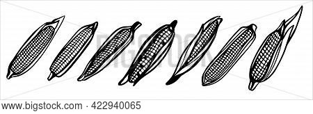 A Set Of Corn Cobs. Harvest. Black And White Illustration In The Form Of A Sign, Logo. Silhouette Fo