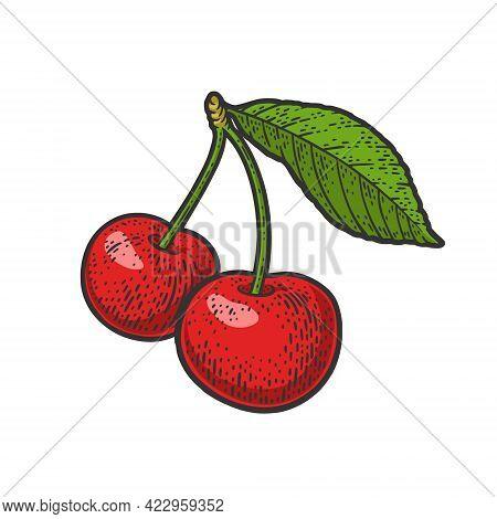 Sweet Cherry Berry Color Line Art Sketch Engraving Vector Illustration. T-shirt Apparel Print Design