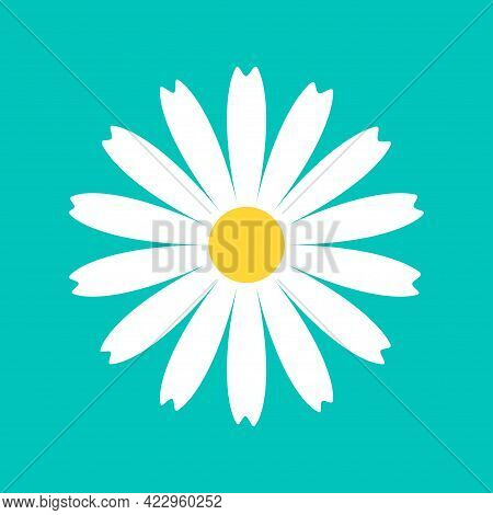 Daisy Chamomile Round Icon. White Flower. Camomile Petal. Cute Plant Collection. Growing Concept. Lo