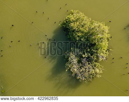 Water Tree On A Lake At Larnaca, Cyprus