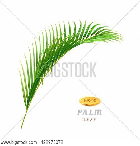 Exotic And Tropical Leaves And Flowers, Isolated Flora Of Rainforests And Jungles. Foliage And Veget