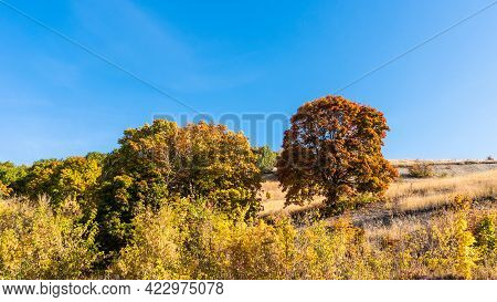 Beautiful Autumn Landscape - Forest And Big Maple With Orange Autumn Leaves On A Hillside On A Sunny