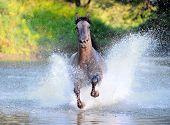 free horse runs trough the splashes of water poster