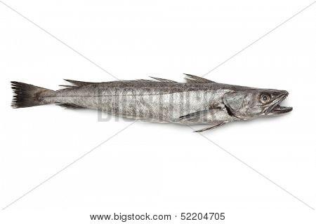Single fresh Hake fish on white background
