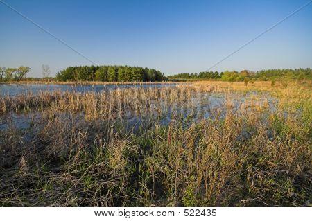 Illinois Wetland