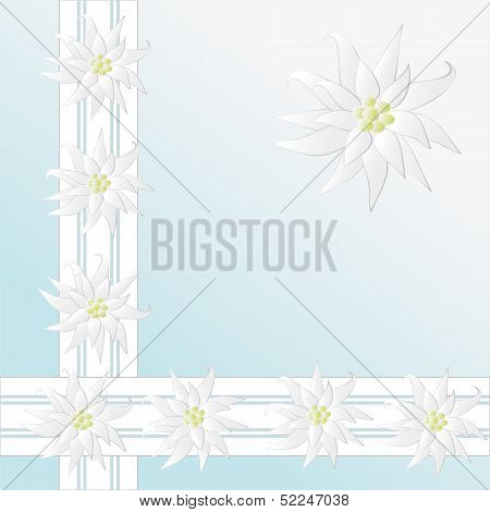 Not a vector. Decorative Pattern With Edelweiss As Background