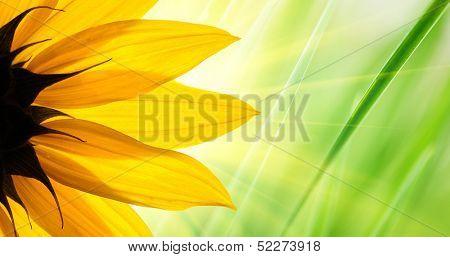 Sunflower flower over over green floral background