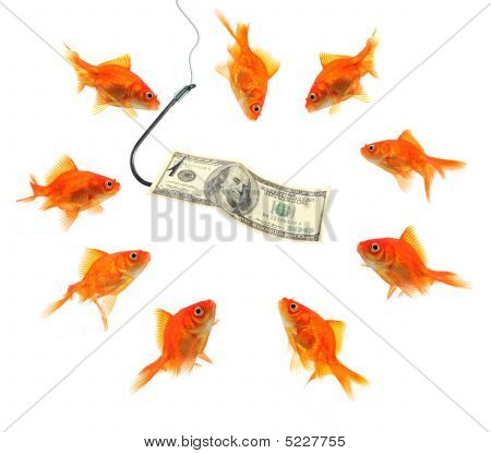 Fishing With Dollar Note