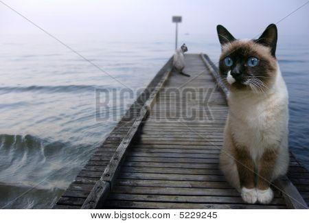 Cats - sentinels