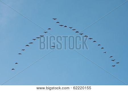 Birds migrating in V formation in spring poster