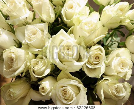 Bunch Of Greenish White Roses, Background