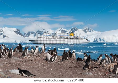 Antarctica penguin colony with cruise liner in the background. poster