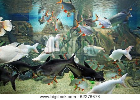 photo of various species of exotic fishes swimming together in aquarium stylized and filtered to resemble an oil painting. poster