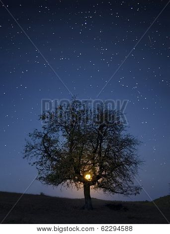 Moon rising over a meadow with tree and stars above at night