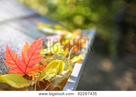 Gutter full of fall leaves