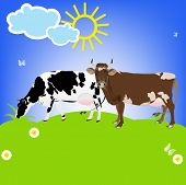 Dairy Cows on a green meadow.Sticker Natural Milk Product.Vector poster