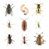 Garden pests. Collection of the insects on a white background. poster