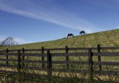 Two horses graze along the ridge of a hill in North Carolina in a fenced pasture poster