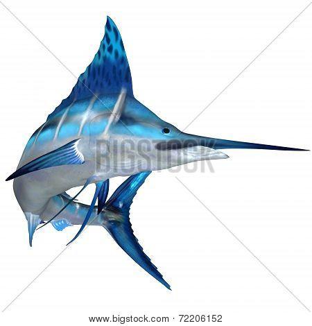 Blue Marlin Ocean Fish