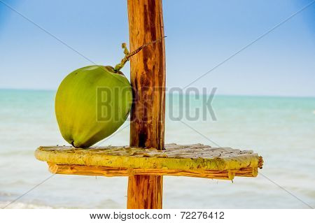 coconut on a table hut sea in background livingston guatemala
