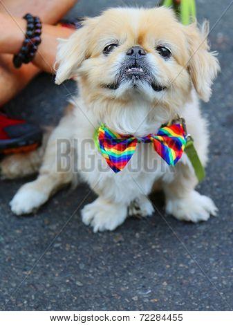 Dog participates at LGBT Pride Parade in New York City