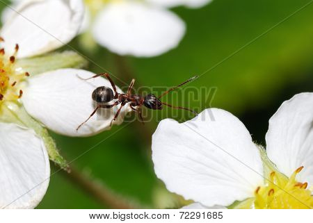 Ant Changes Bloom