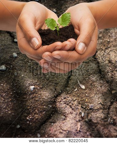 fertility, environment, ecology, agriculture and nature concept - closeup of woman hands holding plant in soil over ground background poster