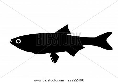 Silhouette Of The Fish Asp