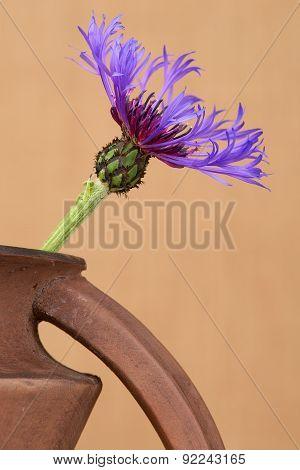 Cornflower (centaurea cyanus) close up in the brown ceramic jar against the beige background.