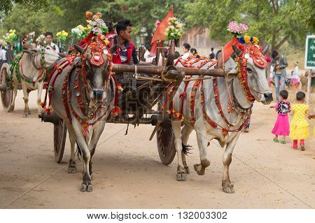 BAGAN MYANMAR - JANUARY 21 2016: Decorated buffalo and local people who participated in the donation channeled ceremony Shinbyu marking the samanera ordination of a boy under the age of 20