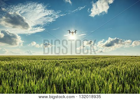 Flying drone and green  field of wheat
