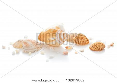 Different seashells and pebbles isolated on white background.