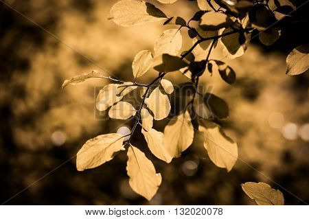 background of tree branches with leaves close-up