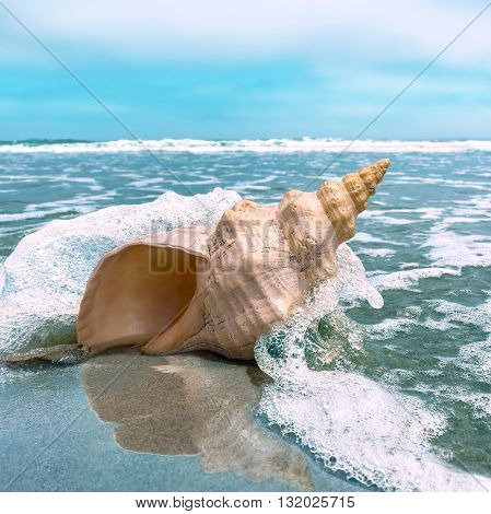 A horse conch on a beach with ocean water splashing and flowing around it.