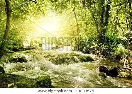 Sunshine in a forest