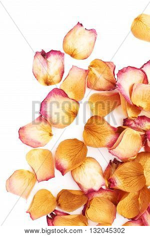 White surface covered with pink old dried rose petals as a romantic background composition top view