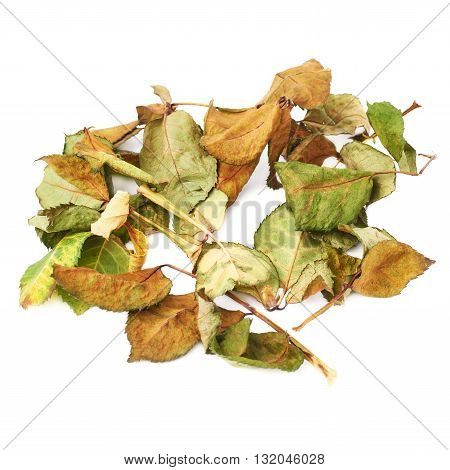 White surface covered with old dried rose leaves as an abstract composition