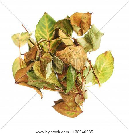 Pile of old dried rose leaves as an abstract composition over isolated white background